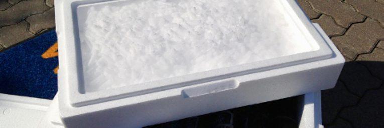 Styroporbox mit Trockeneisfach Header Aktuelles