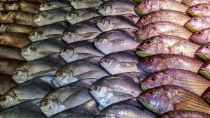 Sichere Transportkühlung mit Trockeneis Coolbags für gefrorenen Fisch